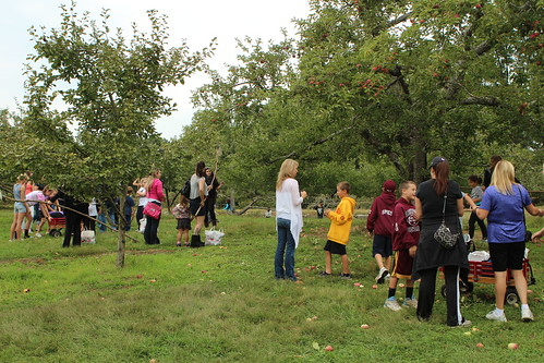 Unexpectedly Crowded Apple Orchard
