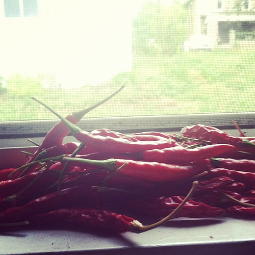 Chilies in the window in Athens, OH