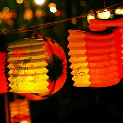 orange, flower, yellow, red, light, mid-autumn festival, lantern, lighting,