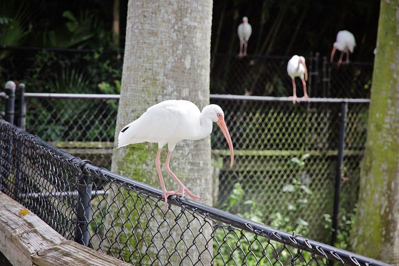 Flamingo Gardens 33