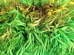 leaf, grass, plant, water spinach, green, produce,