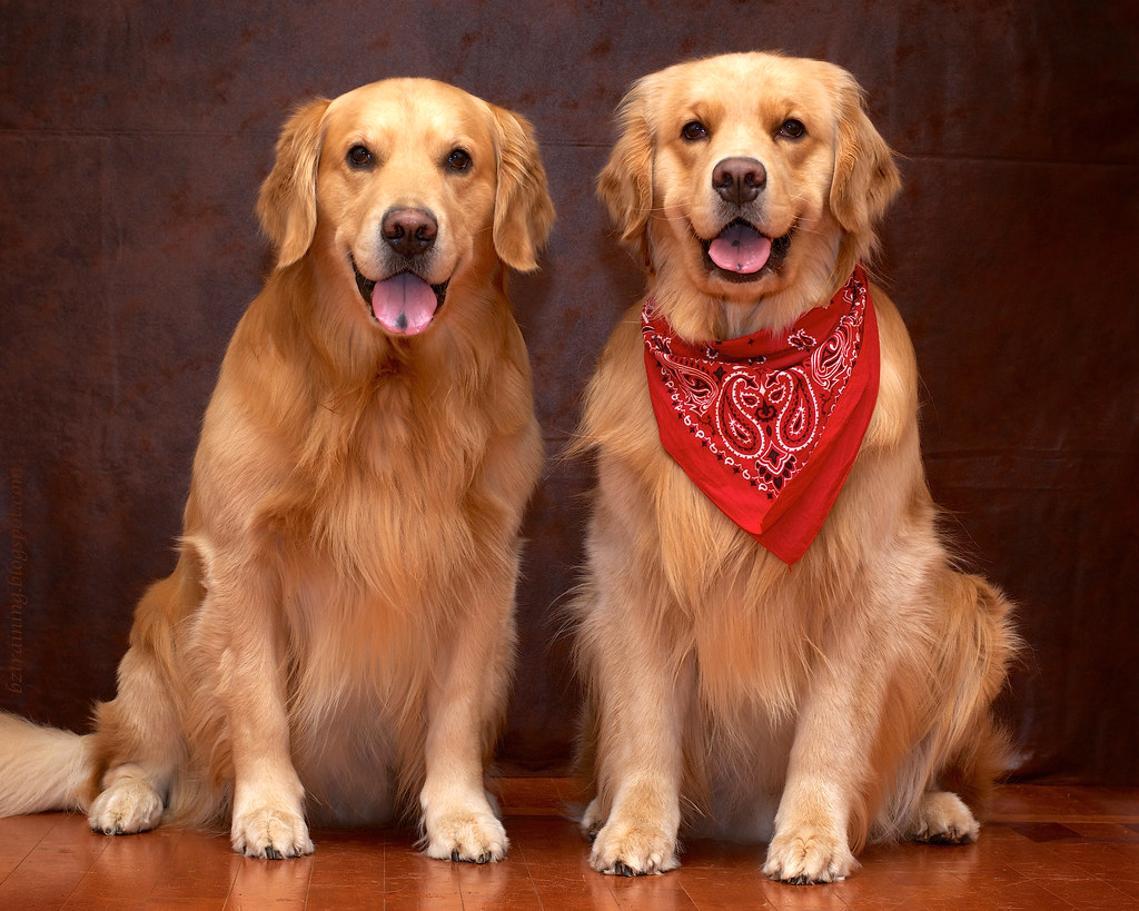 Rustic Retrievers
