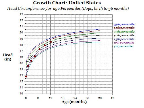 growth chart 12 months -head circumference