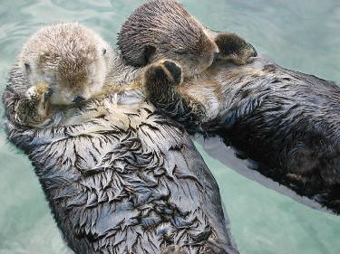 Otters_3