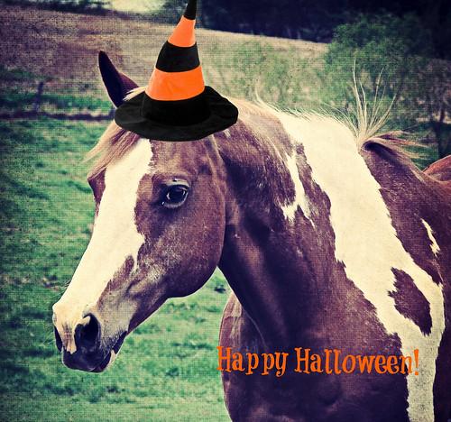 Halloween Flashy