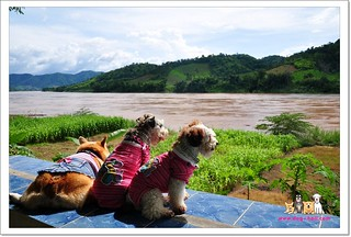 Phurua-Chiangkhan-Trip-with-dogs_E11005077-041