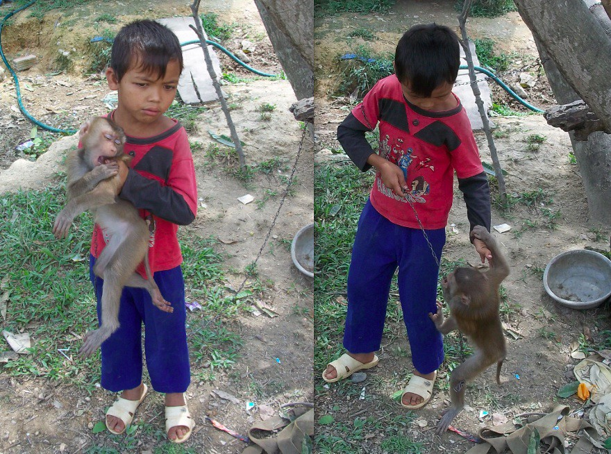 Pet Monkey, Vietnam