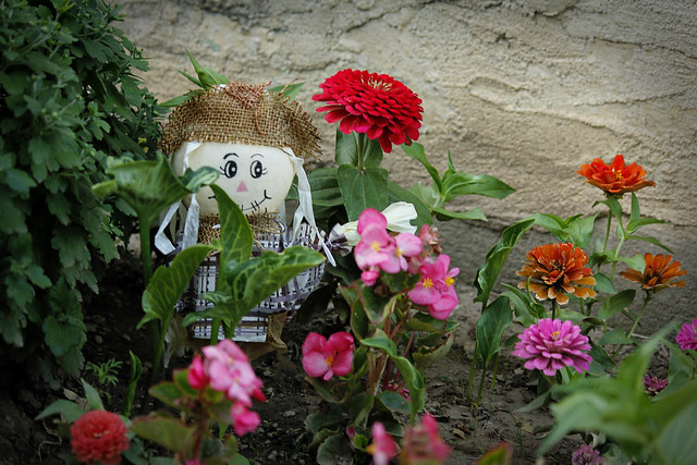 Scarecrow and Flowers