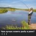 Чем лучше ловить рыбу в реке?
