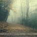 Misty path by .fulvio