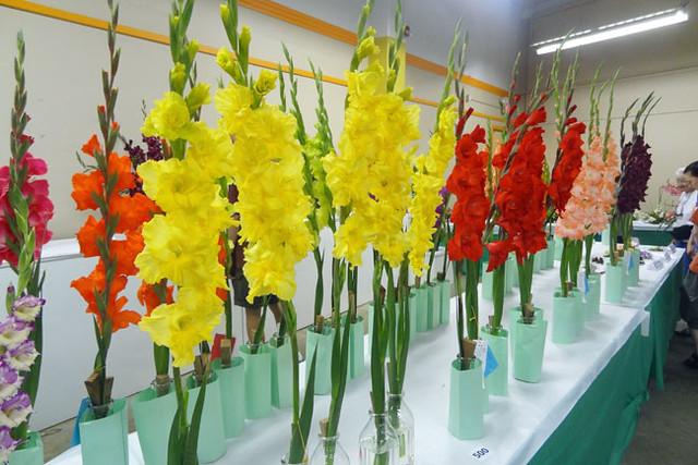 gladiolus2