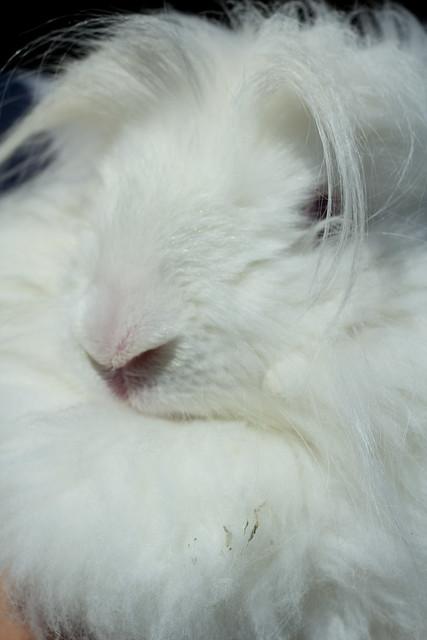 bunny2 (1 of 1)