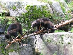 polecat(0.0), animal(1.0), zoo(1.0), mustelidae(1.0), mammal(1.0), fauna(1.0), jungle(1.0), mink(1.0), wildlife(1.0),