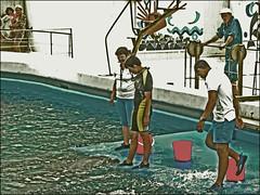 Constanta Dolphinarium