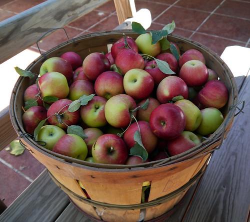 2012-09-08 - Apples - 0005