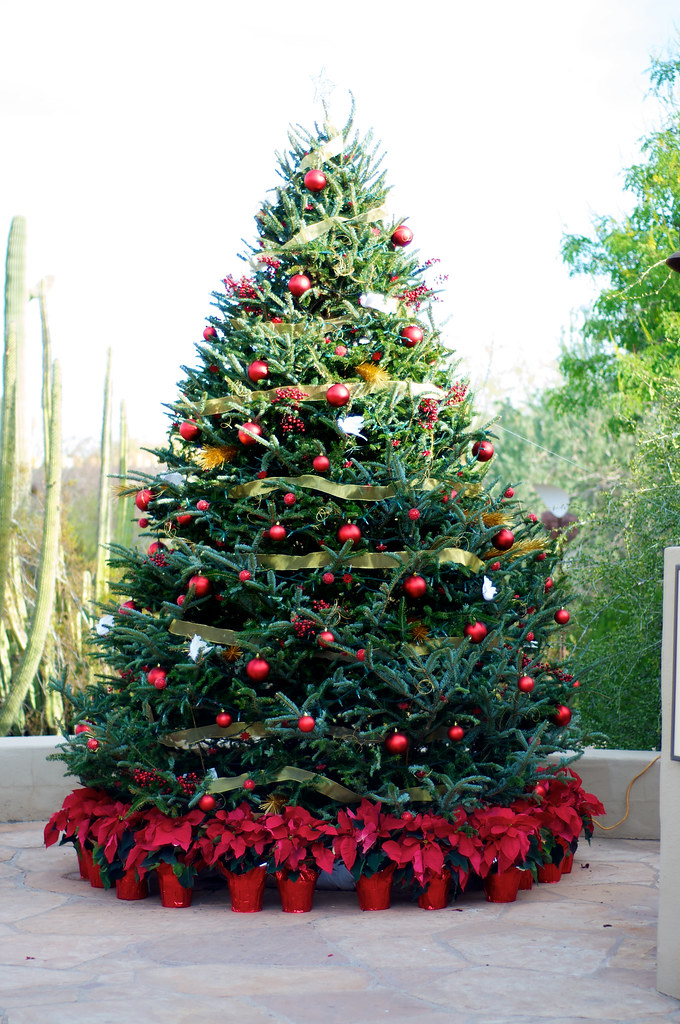 Christmas Tree In The Desert.A Christmas Tree In The Desert A Christmas Tree Decorated