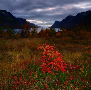 autumn colors in Ersfjordbotn