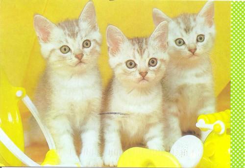 Triple Trouble Kittens