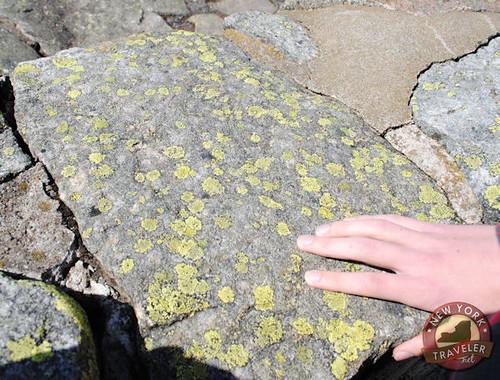 Whiteface Lichen