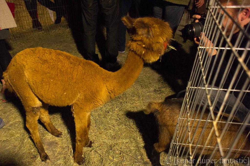 California Altered State Fair - Petting Zoo