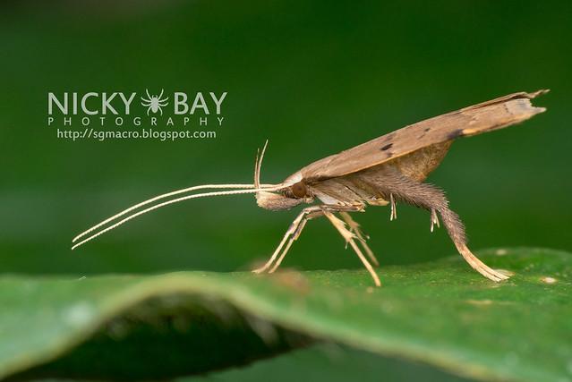 Moth - DSC_6041