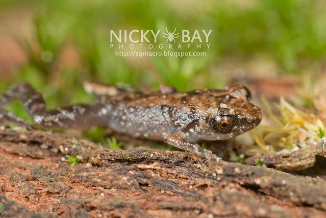 Frog - DSC_9881