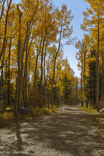 trees orange tree leaves yellow gold leaf colorado path trail aspen d60