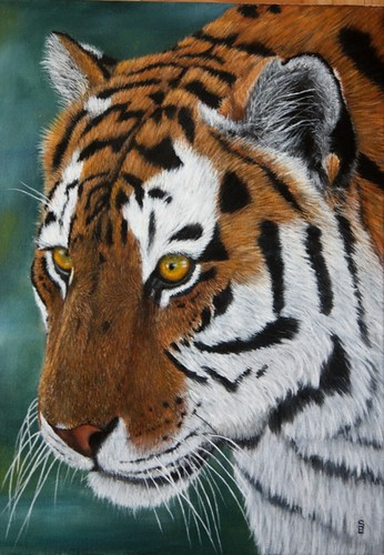 Tiger Closeup by Sid's art