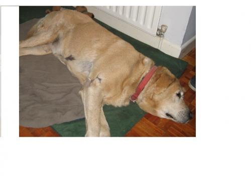 [Reunited] Tue, Oct 2nd, 2012 Lost Male Dog - Ballymackea, Mullagh, Clare
