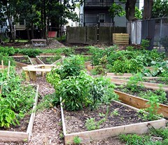 community garden on previously vacant lot (c2012 FK Benfield)