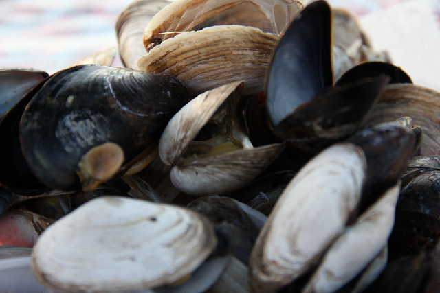 New England Steamers and Clams | Flickr - Photo Sharing!