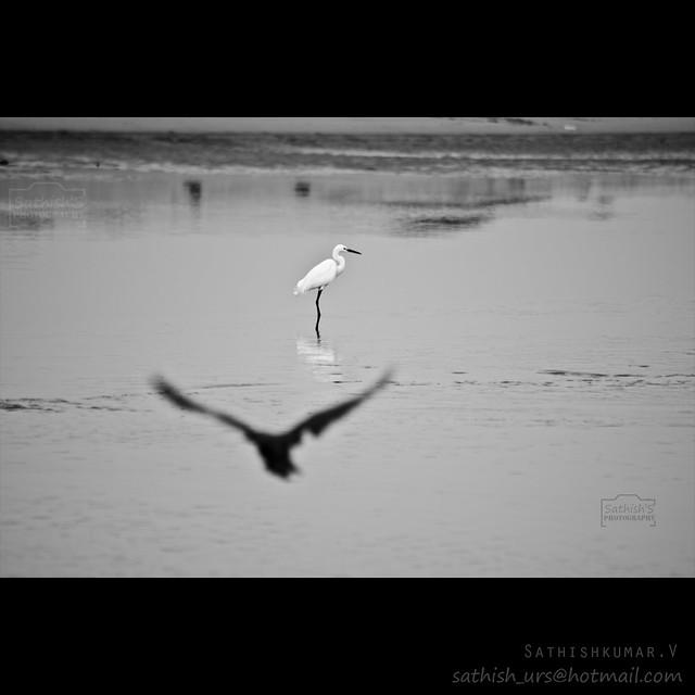 Focused and Defocused Birds