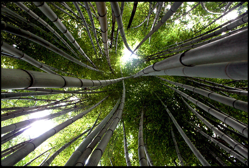 20120720   Bamboo Forest, Cherokee North Carolina 004