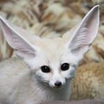 Wildlife Wednesday: Foxes