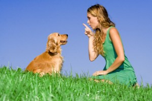Train your dog with a clicker