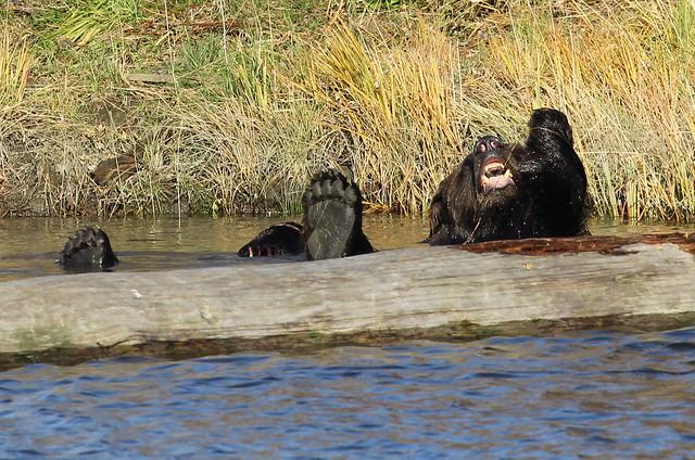 Alaska Wildlife Conservation Center near Anchorage