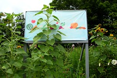 South Cumminsville Community Garden