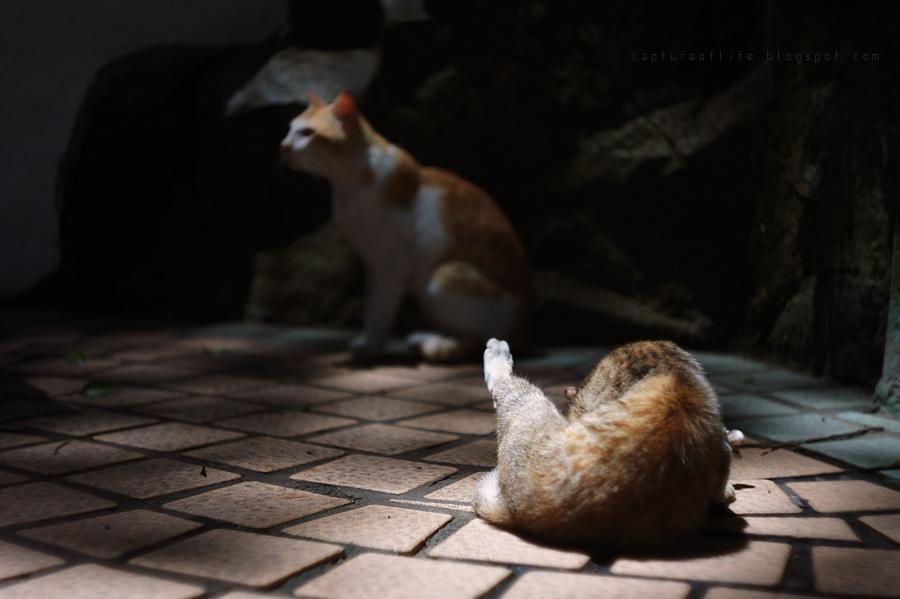 大澳貓兒們