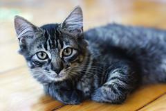 [フリー画像素材] 動物 1, 猫・ネコ ID:201209041000