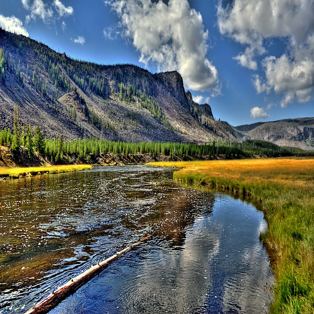 Fly fishing in yellowstone national park return of the for Yellowstone national park fishing