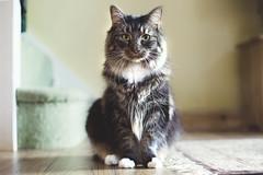[フリー画像素材] 動物 1, 猫・ネコ ID:201209081000