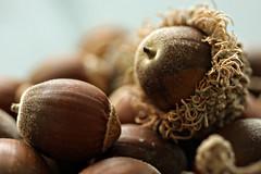 Fallen Nuts