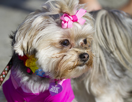 Dog with pink bow