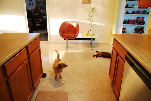 kitchen with pets