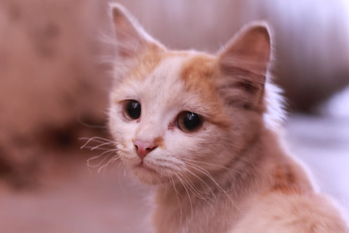 [フリー画像素材] 動物 1, 猫・ネコ, 子猫・小猫 ID:201209261000