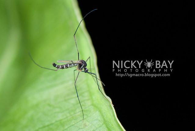 Mosquito? - DSC_7131