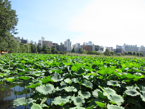 Shinobazu pond.