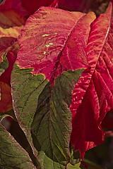 Decorative leaves3