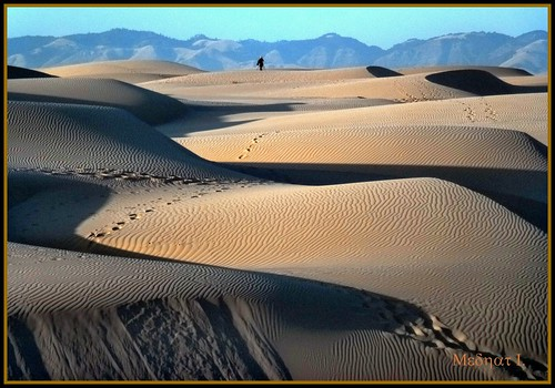 ocean birds sand pacific dunes medhathi mygearandme mygearandmepremium mygearandmebronze mygearandmesilver mygearandmegold mygearandmeplatinum mygearandmediamond coastalandwaterviewsbymi