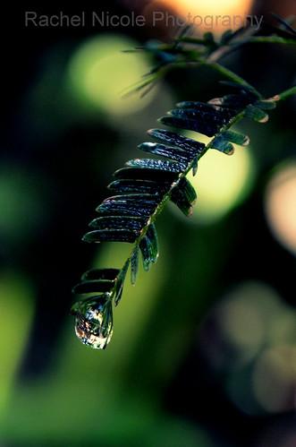 raindrop <3